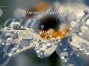 Simon Butterfly ♥ Rain, Rain, Rain ♥