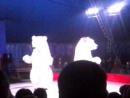 Танцующие белые медведи под песню носа
