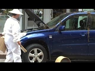 Тревога! Пчелы нападают на авто!