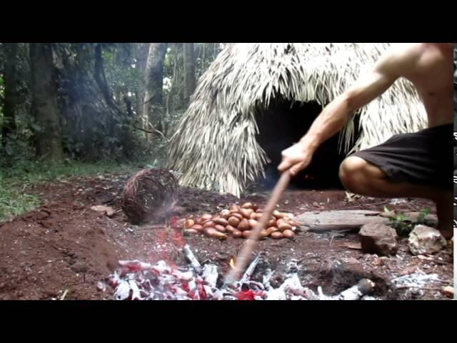 Primitive Technology Making poisonous Black bean safe to eat (Moreton Bay Chestnut)