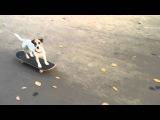 Эмби. Собака на скейте.