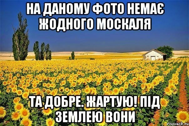 ОБСЕ просит поддерживать ее усилия по урегулированию ситуации на Донбассе - Цензор.НЕТ 900