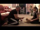 Дрессировка щенка: Дай лапу!
