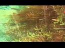 Биотоп радужниц (Melanotaenia boesmani). Ручей Фраму. Остров Новая Гвинея
