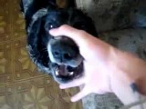 Beatbox Dog Abwabwabwa (Drum'n'Bass Edit)
