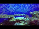 Подводный мир Красного моря - 2014