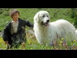 «Белль и Себастьян» (2013): Трейлер / http://www.kinopoisk.ru/film/794620/