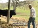 Эмоциональный мир сельских животных / The Emotional World Of Farm Animals