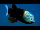 Самые странные в мире животные. В океане.