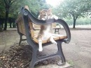 Cat relaxing on a bench 猫がベンチでリラックス