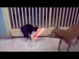EPIC FAIL - Funny cats compilation!