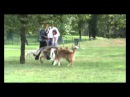 Czechoslovakian Wolfdog: River takes another walk in the park