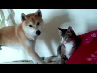 кот vs пес | Fighting Pets Lecture By Owner