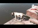 Собака ныряет на счёт пять умеет считать