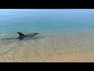 Крым. Дельфин на берегу ловит рыбу.