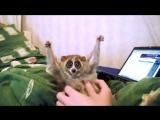 Лори - самые умильные животные в мире