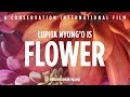 Nature Is Speaking – Lupita Nyong'o is Flower   Conservation International (CI)