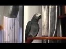 Попугай Григорий - в кругу семьи ПОКАКАЛ - 2 сезон, 20 серия