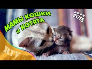 Самые смешные кошки #5 ∙ Приколы с животными 2015 ∙ Best Funny Cats Compilation · Part 5