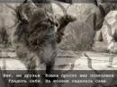 История про Кошку и её Человека.