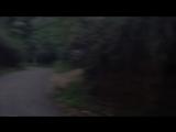 Призрак в лесу  попал в кадр...