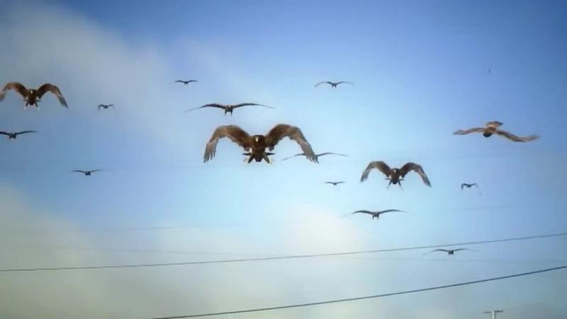Birdemic Shock and Terror 2010 Птицекалипсис Шок и Трепет 2010