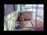 Лабрадоры самые смешные, прикольные, ржачные собаки