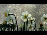 Блюз под дождём...       Раймонд Паулс.