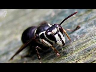 Топ 10 самых больных укусов насекомых