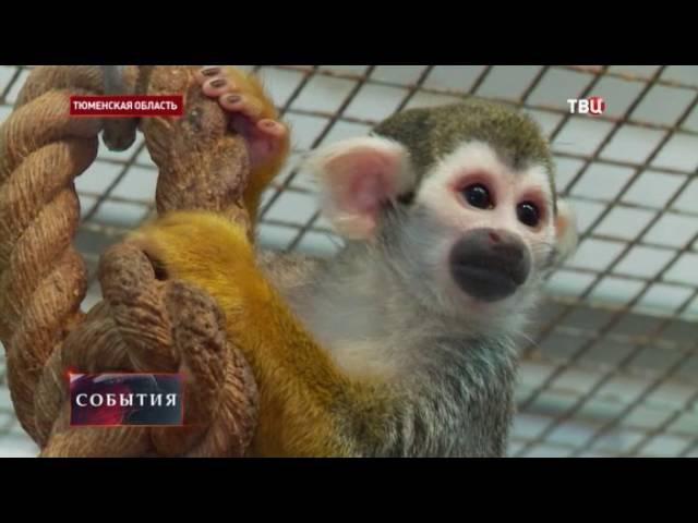 Кошка из Тюмени стала приемной мамой для обезьянки