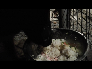 Макс ест курицу, рис, капусту, яблоки, перепелиные яйца