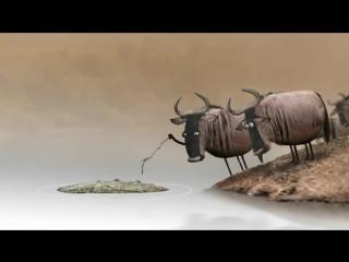 Антилопа гну. Философский мультик