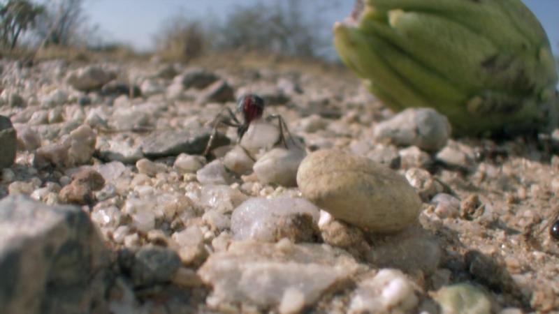 BBC: Жизнь / BBC: Life (2009) BDRip 720p - (9 серия - Растения)