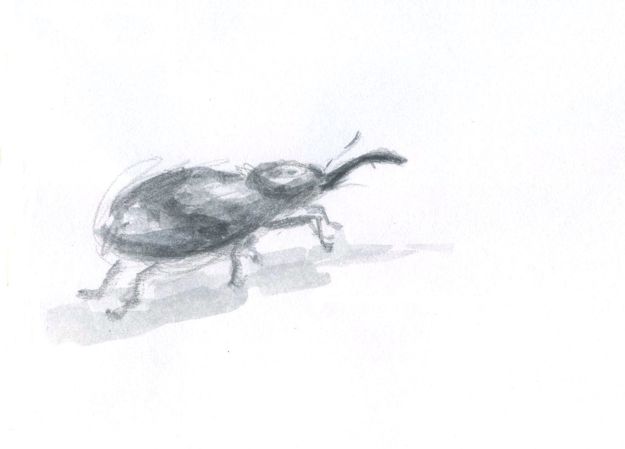 Жук-долгоносик