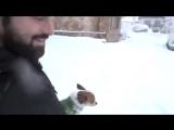 Почему маленькие собачки не радуются зиме