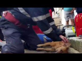 ВРумынии пожарный оказал экстренную помощь пострадавшей напожаре собаке испас псу жизнь. Хиты интернета