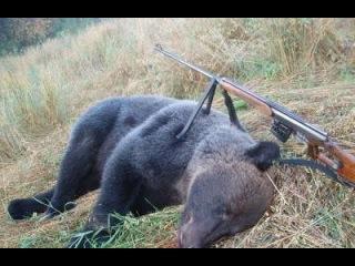 Охота на медведей и кабанов в овсах. Из цикла |Наши путешествия|