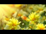 4 hours of relaxing, peaceful, nature instrumental music,