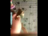 Неразлучники птенцы выкормыши