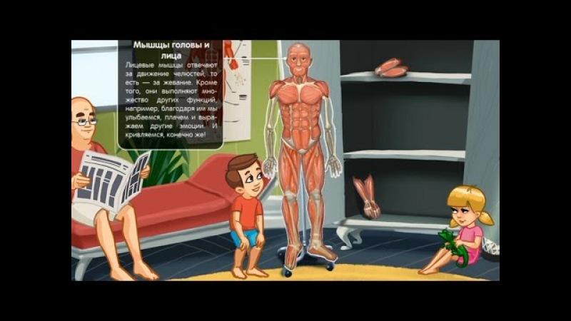 Мышцы. Развивающий мультфильм про строение мышц тела