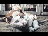 Зомб Дворовый кот