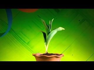 Tulip Time Lapse | Busch Gardens Williamsburg VA