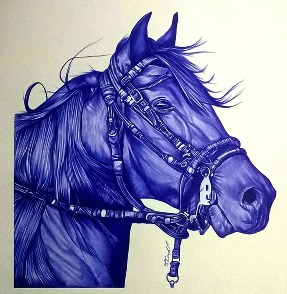 Лошадь,которую я нарисовал шариковой ручкой.Как Вам?Интересуют Ваши мн