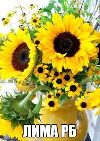Лима-рб уфа цветы