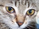 Самые трогательные видео с Животными. ДО СЛЁЗ 1