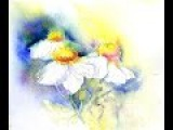 How to paint Tree Poppies in Watercolour very loose wet into wet by Sheila Gill