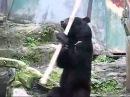 Kung-fu medved конг фу медведь