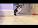 Опа Гангам Стайл! Смешные коты!