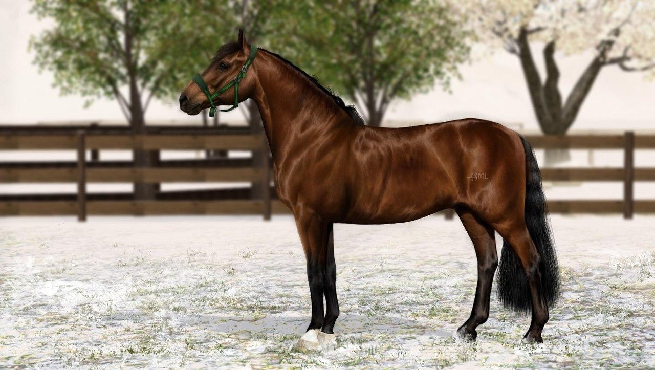 Регистрация лошадей в RHF 2 - Страница 5 RnG-JyPC2eA