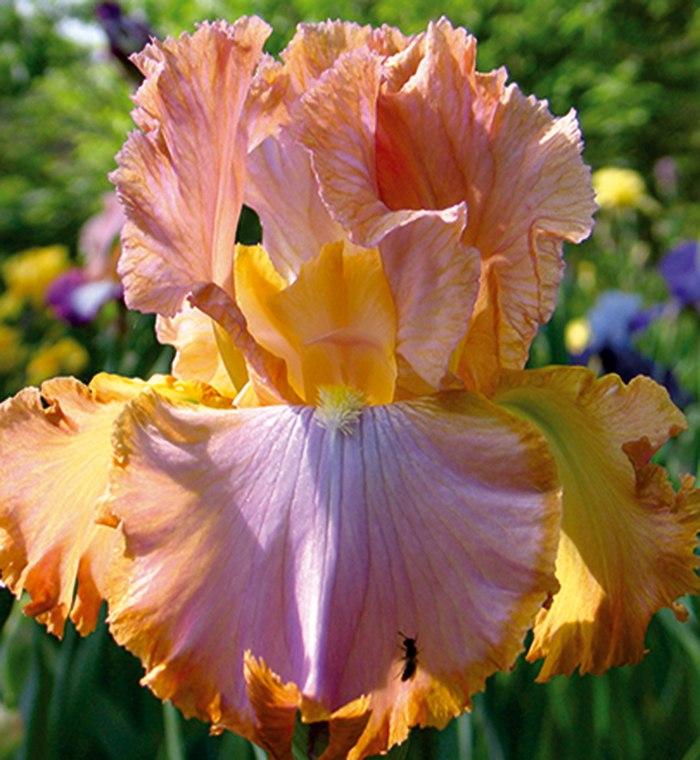 Цветы многолетники для сада цена в Краснодаре